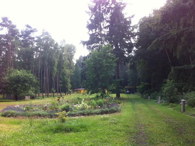 Blumenwiese und Ferienhäuser