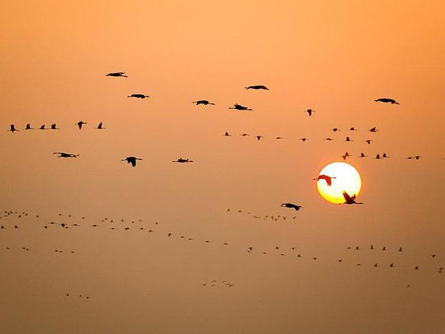 Angebot Vogelzug