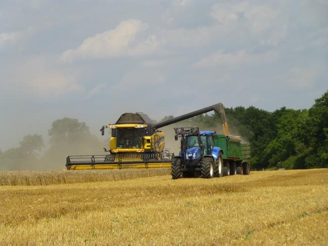 Getreide dreschen