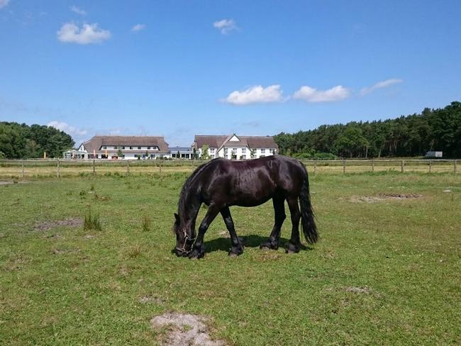 Pferd - Koppel