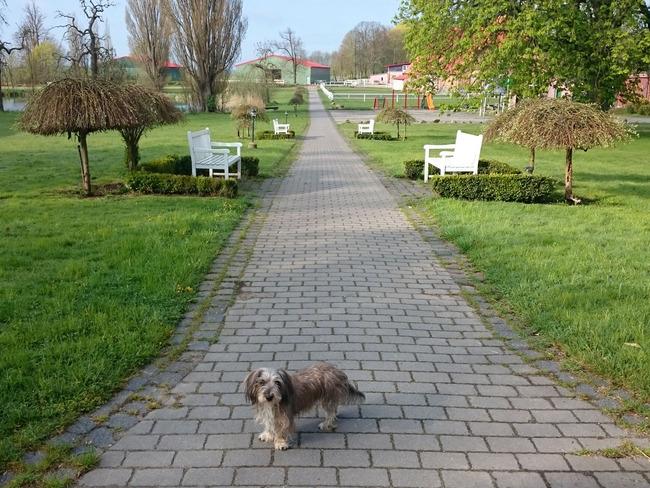 Weg, Hofteich, Spielplatz