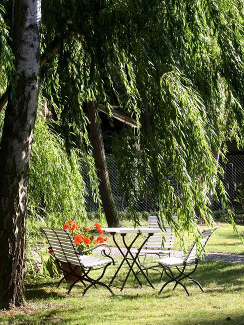 Gartenstühle unterm Birkenbaum