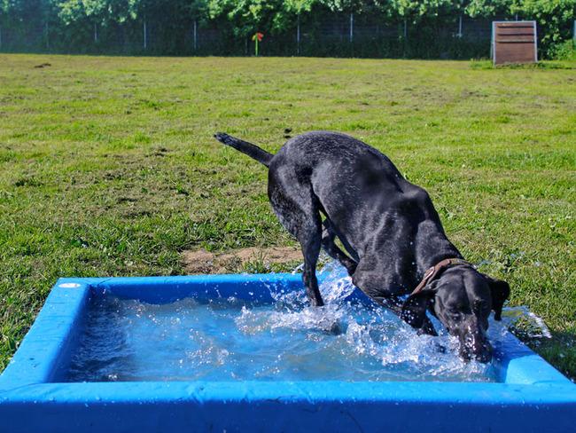 Hund - Pool