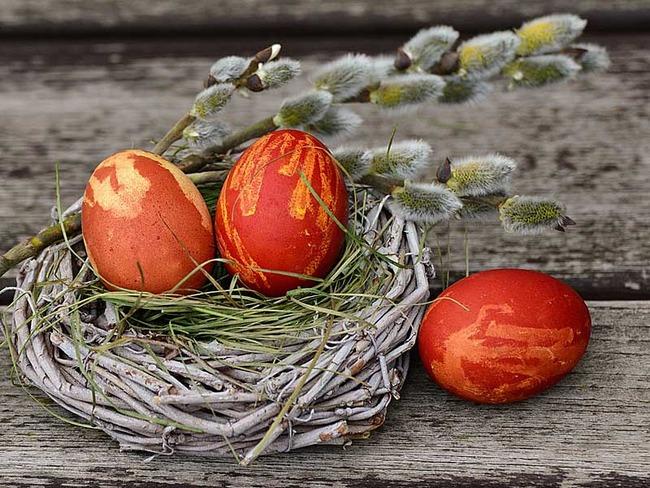 Nest mit Ostereiern in der Osterzeit