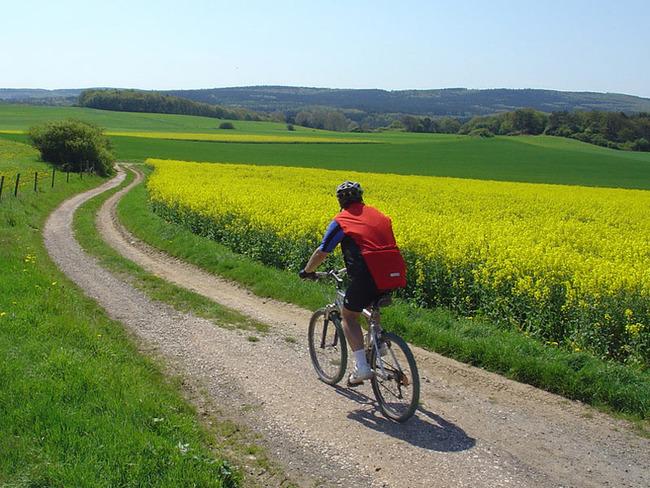 Radfahrer auf einem Feldweg entlang des leuchtend gelb blühenden Rapses