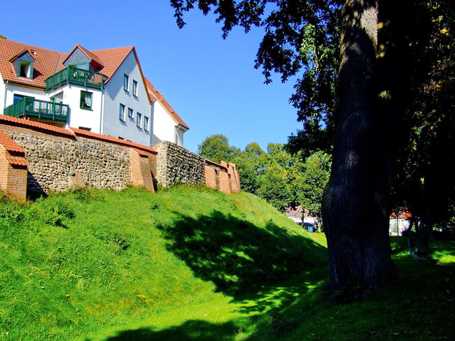 alte Eiche vor der historischen Stadtmauer von Sternberg