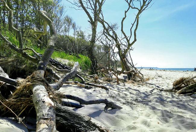 naturbelassener Weststrand auf dem Darss