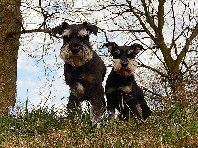 Hunde auf dem Waldhof