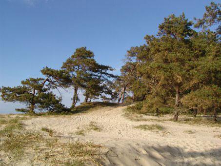 Düne an der Küste