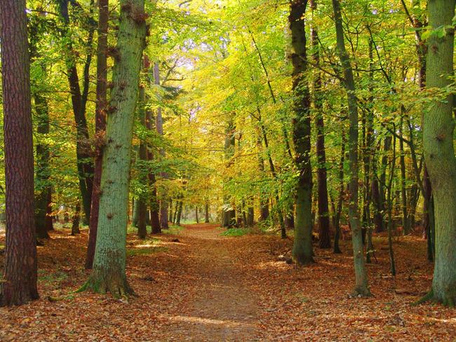 Kurpark im Herbst
