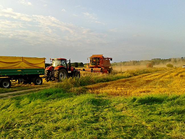Zuschauen bei der Ernte