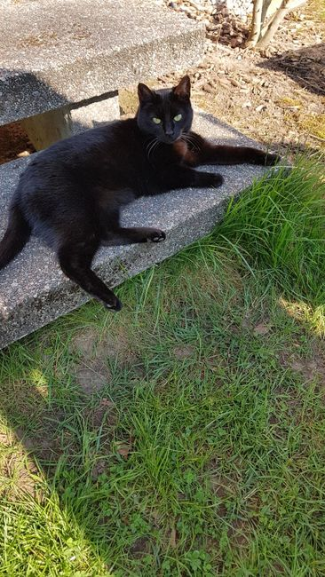 Unsere Katzen freuen sich auf Streicheleinheiten