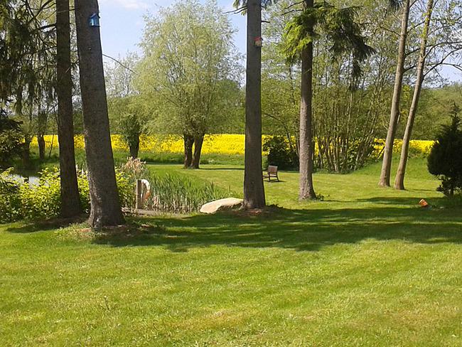 Park mit Teich und Rapsfeld im Hintergrund