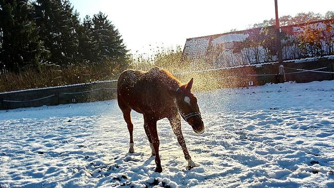 Stute im Schnee