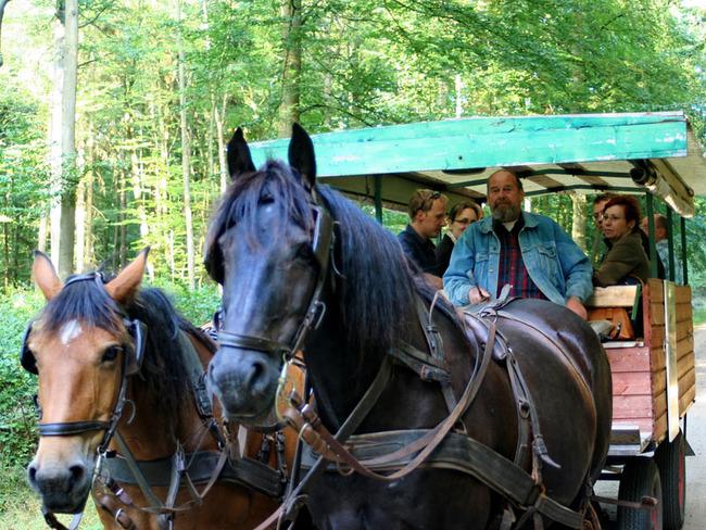 Kutschfahrt durch das Landschaftsschutzgebiet Lewitz
