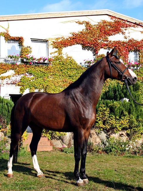 Pferd auf dem Reiterhof