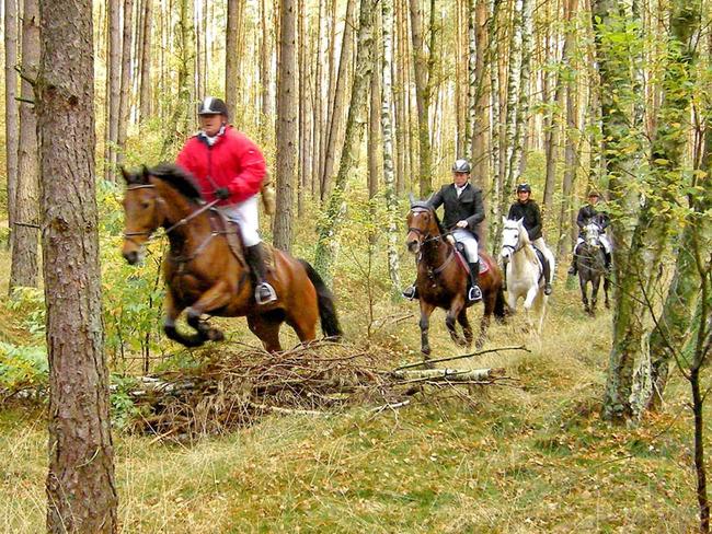 Gruppe Reiter unterwegs im Wald