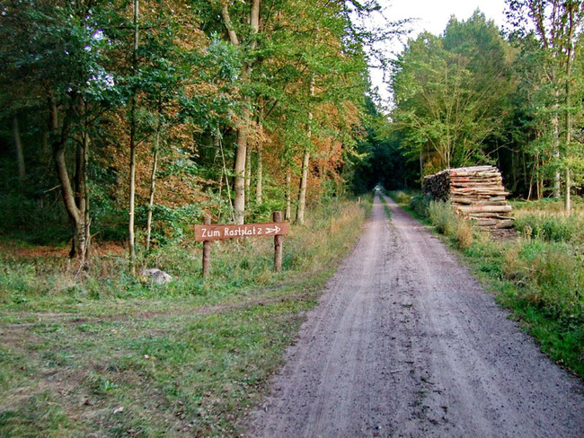 Waldweg bei Sukow
