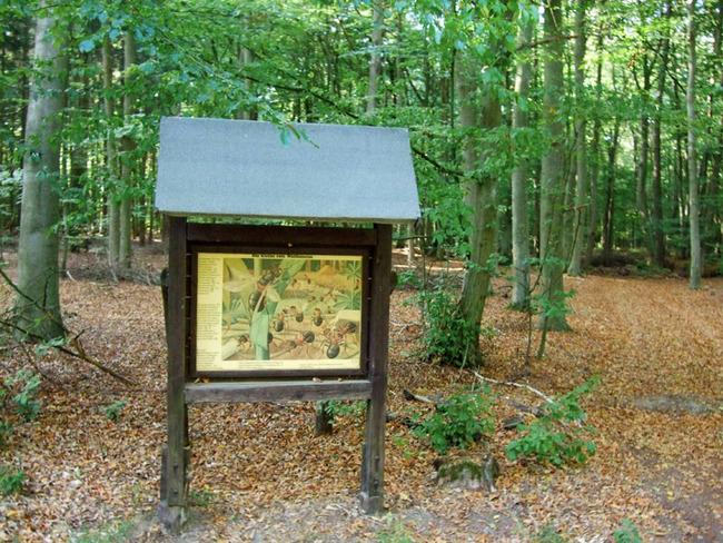 Erklärungstafel im Wald