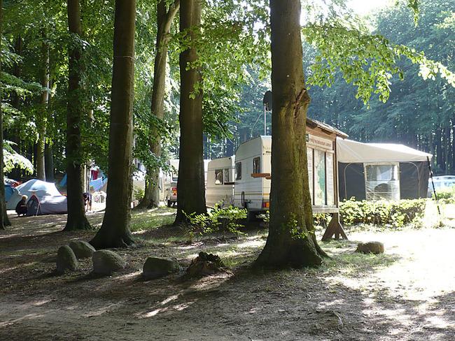 Stellplätze unter Bäumen