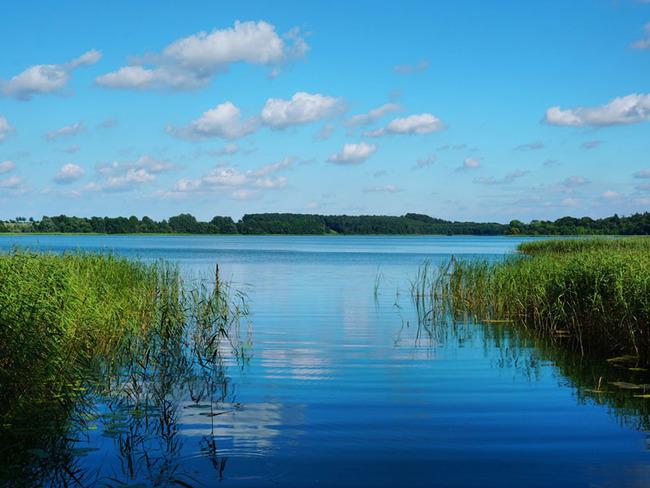 Ufer des Schaalsees im Biosphärenreservat