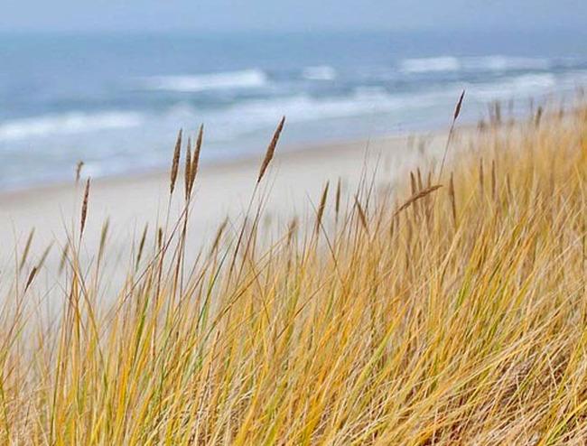 Dünen, Strand und Ostsee