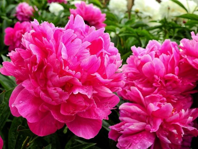 flower-2370950_960_720