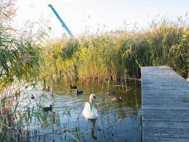 Teich mit Schwan und Enten