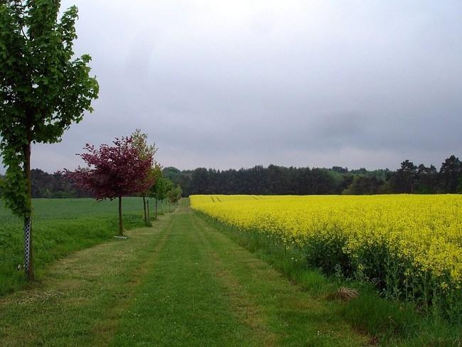 Wiesen-feld-weg