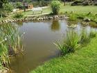 Teich mit Seerosen