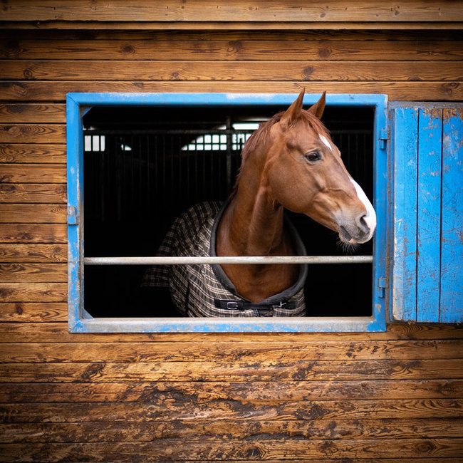 Pferdebox mit Aussicht