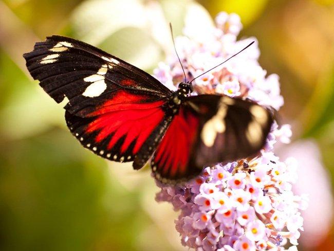 Schmetterlingsfarm Trassenheide