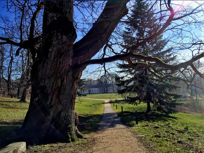 Schlosspark Putbus