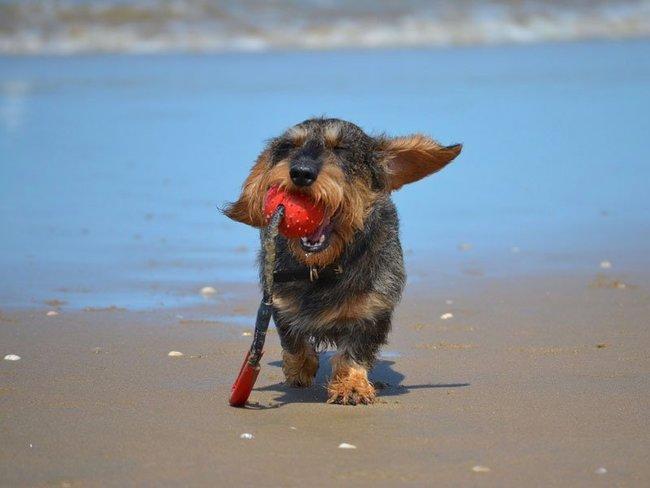 Hundestrand Lubmin