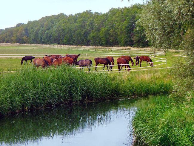 Landschaftsschutzgebiet Lewitz