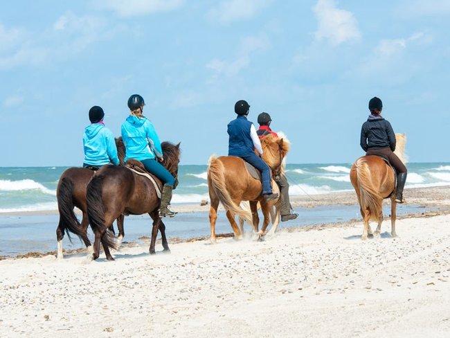 Reiten/ Strandausritte auf der Insel Sylt