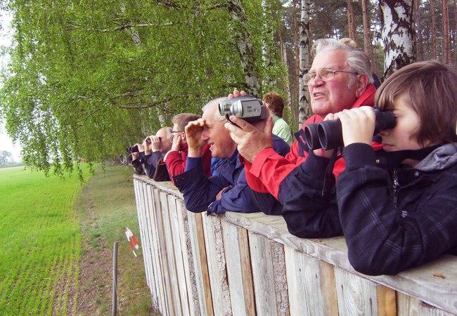 Adlersafari im Müritz-Nationalpark