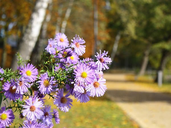 Herbstangebot