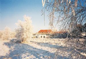 winter-heiderose