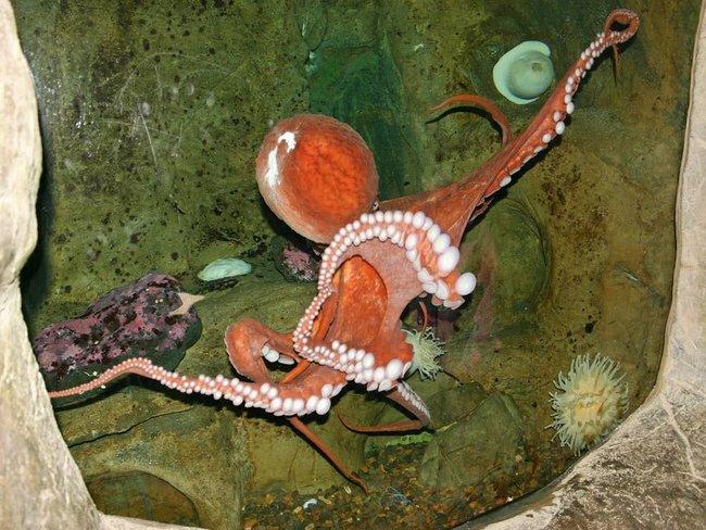 Meereswelten (Sommer)