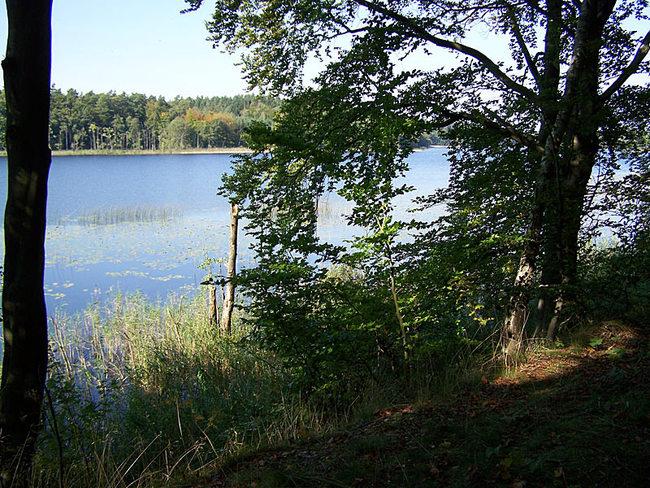 der Mühlensee ist komplett von Wald umgeben