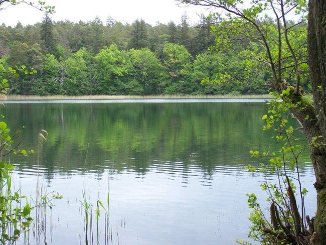 Bornsee im Müritz-Nationalpark