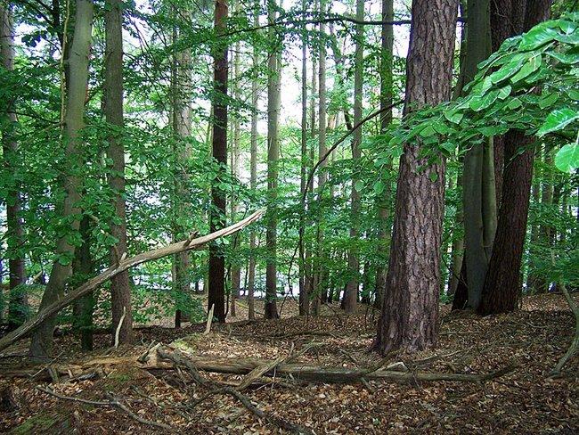 Wald am Trinnensee