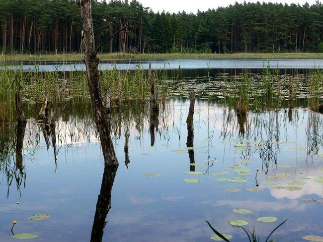 Urlaub genießen und Natur erleben am Müritz-Nationalpark