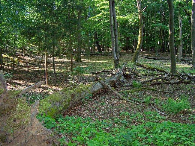 Walderlebnispfad Serrahn