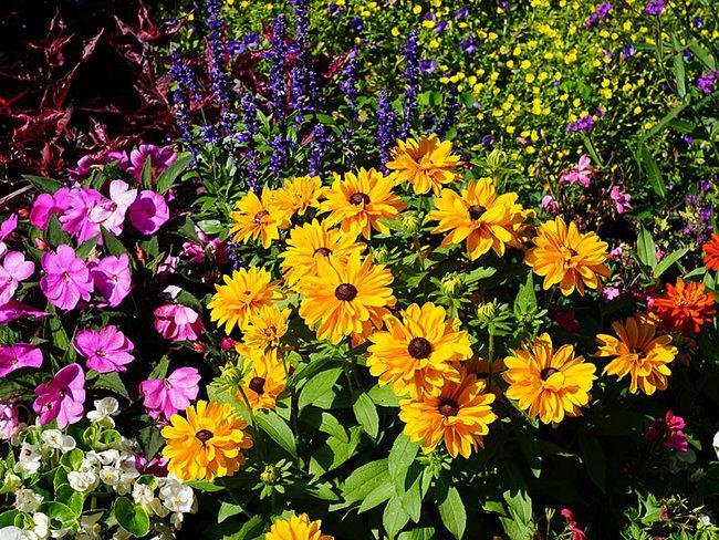 Frühlingsblumen - © pixabay