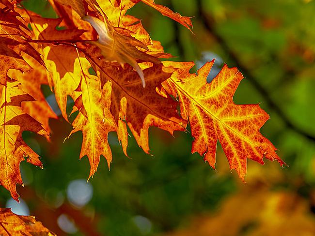 ABL-Bild Angebot Blätterrauschen