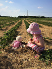 Erdbeer-Selbst-Pflückfeld