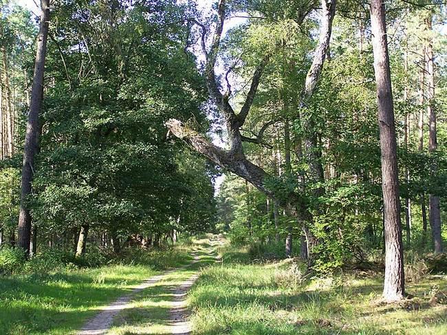 Radwanderweg bei Klockow