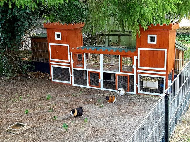 Meerschweinchen auf den Ferienhof